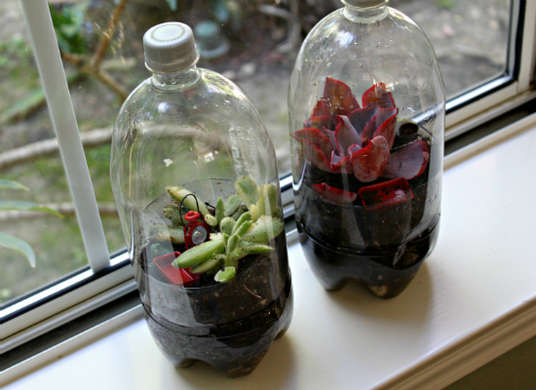 террариум из пластиковых бутылок
