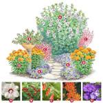 Декоративные схемы посадки растений в контейнерные сады
