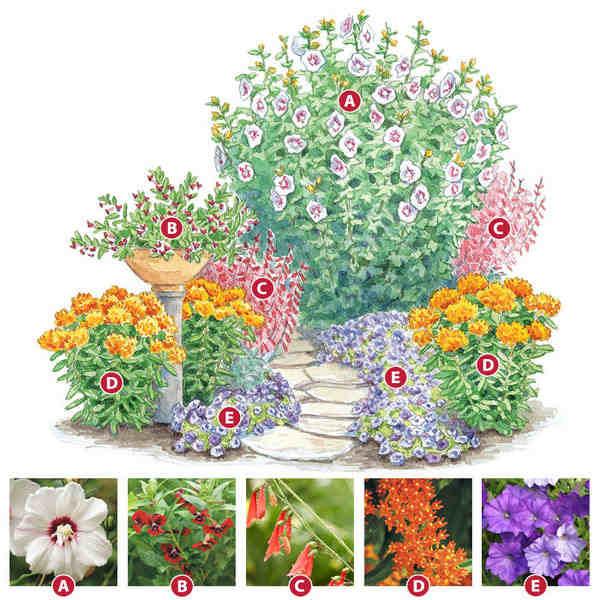 схема цветочной клумбы