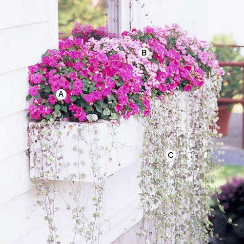 цветы в оконных ящиках