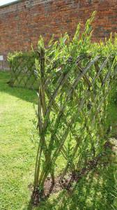 живая изгородь - плетень