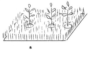 капельный полив деревьев