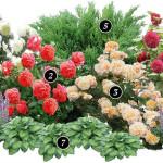 Оформление клумбы с розами на даче, схема клумбы