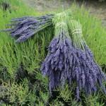 Как заготовить травы