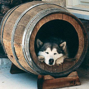 будка для собаки фото 4