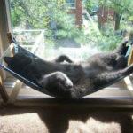 гамак для кошки на подоконнике
