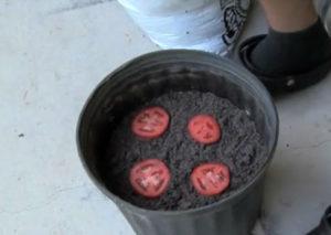 посев семян помидор