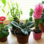 Необычная Подкормка для Комнатных растений ... Зубной пастой
