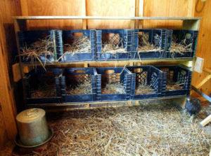 гнездо для несушек рис 5