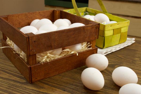 как хранить яйца фото