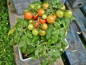 овощи в контейнерах фото 8